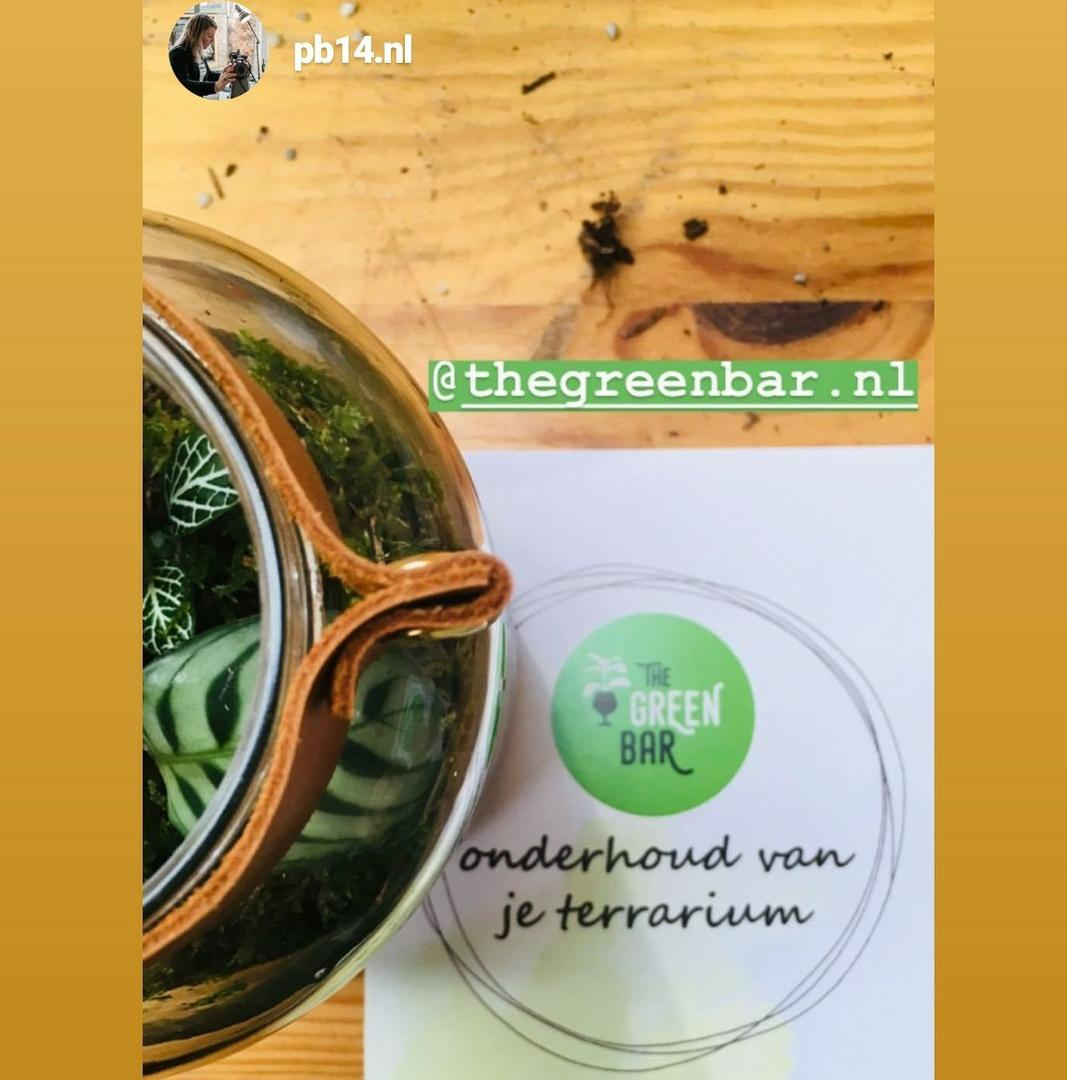 Workshop terrarium maken